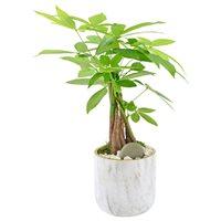 Money Tree in Naturally Ceramic